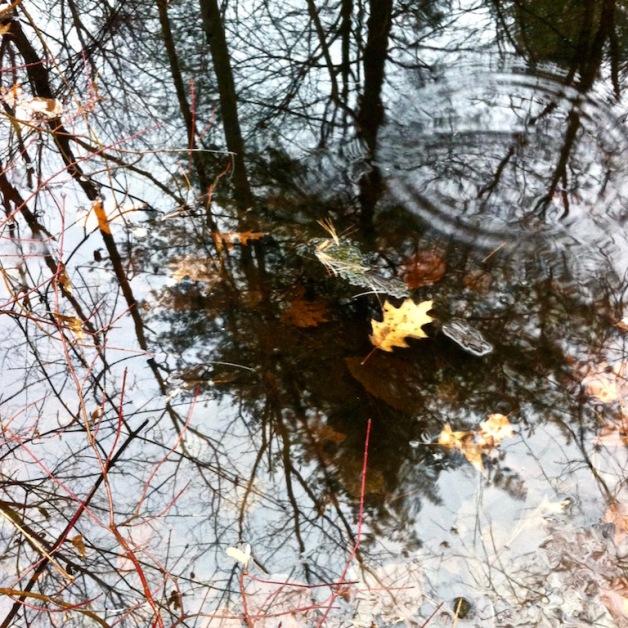 forest pool leyden ma november